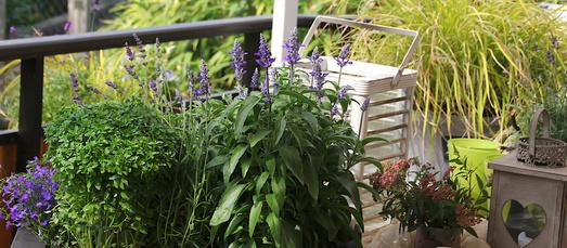 Balkon Tipps Nordbalkon mit Windlicht und Grünpflanzen