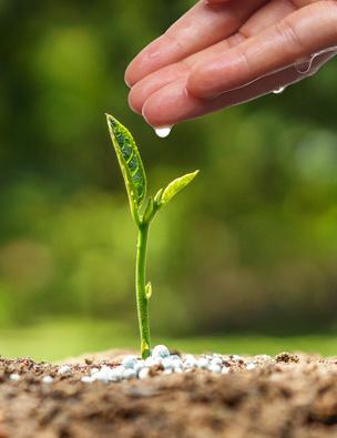 Aussaat - Anzucht Jungpflanze