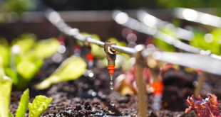Automatisches Bewässerungssystem Balkon