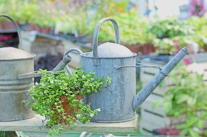 Pflanzen richtig gießen