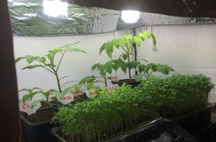Pflanzenanzuchtstation selber bauen beleuchtet