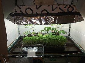 Pflanzenanzuchtstation selber bauen mit licht