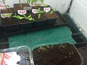 Pflanzenanzuchtstation selber bauen Heizmatte