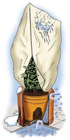 Außergewöhnlich ▷ Balkonpflanzen winterfest machen | Pflanzen richtig überwintern #HI_22
