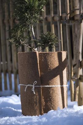 Balkonpflanzen Winterfest Machen Pflanzen Richtig Uberwintern