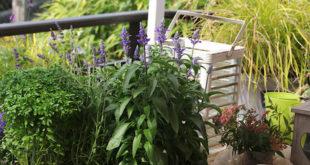 Gärtnern – tolles Hobby, aber bitte ohne Chemie