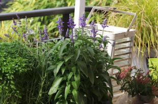 Gärtnern auf engem Raum